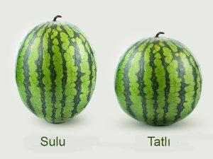 Tatlı ve Sulu Karpuz